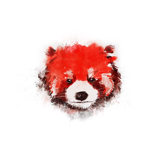 Red Panda (White) Art Print