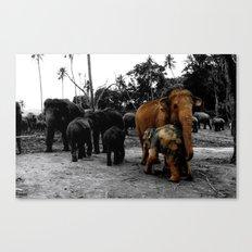 Pinnawala Canvas Print