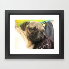 Cute Pug Sleeping - hard day at the beach Framed Art Print