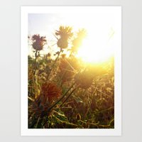 Espinitas Summer Art Print