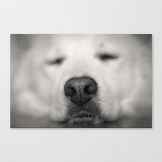 so sleepy - dog Canvas Print