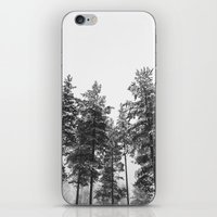 simply trees in winter iPhone & iPod Skin