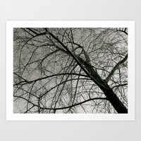 Withered Away Art Print