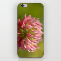 Pink Clover 5033 iPhone & iPod Skin