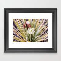 Yucca Flowers In Bloom Framed Art Print