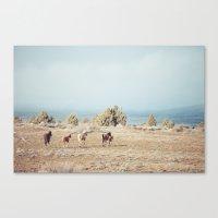 Oregon Wilderness Horses Canvas Print
