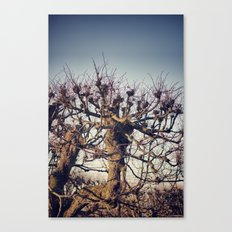 :: lonely tree :: Canvas Print