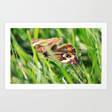 Hiding In The Grass Art Print