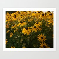 Drake Park Flowers...Daw… Art Print