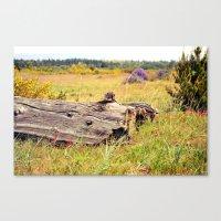 beach log Canvas Print