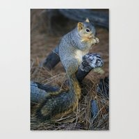 Mr. Squirrel! Canvas Print