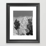 Alpinia Purpurata – Re… Framed Art Print