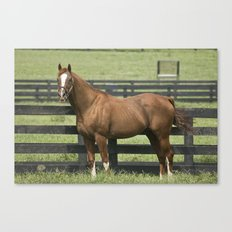 Marquetry -  Old Friends Equine, Georgetown, KY Canvas Print