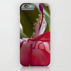 Christmas Cactus iPhone 6s Slim Case