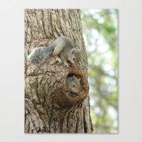 Squirrels 2015 II Canvas Print