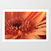 Sunshine Orange Gerbera Art Print