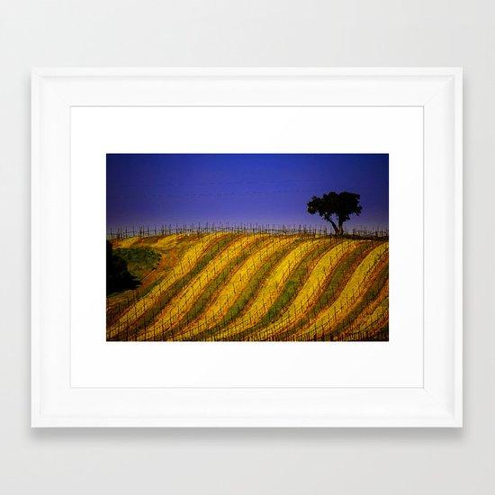 Vineyard in Northern California Framed Art Print