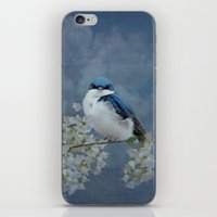 Tree Swallow iPhone & iPod Skin