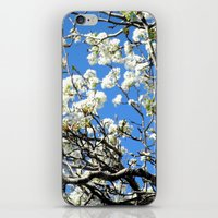 Dogwood in the sky iPhone & iPod Skin