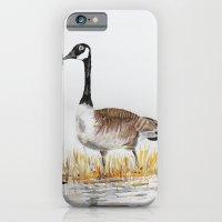 Bernache du Canada (Canada Goose) iPhone 6 Slim Case