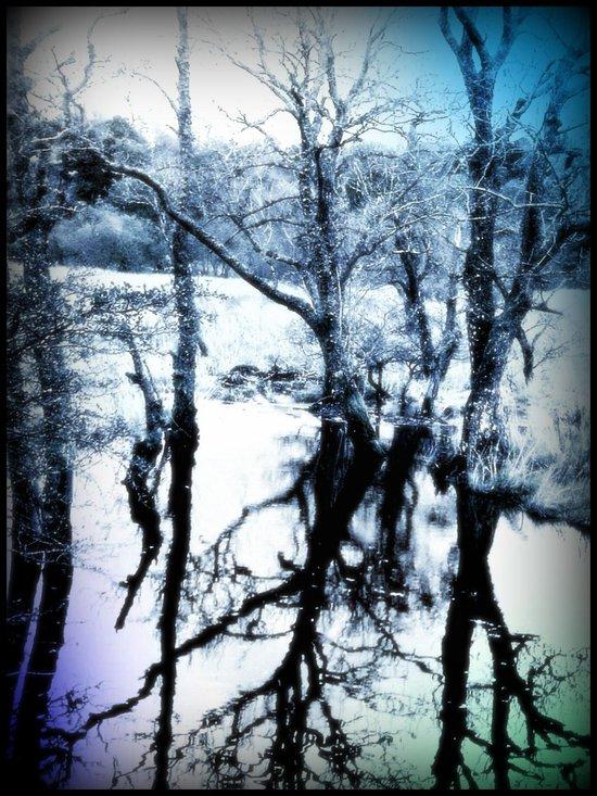 - Winter Reflections - Art Print