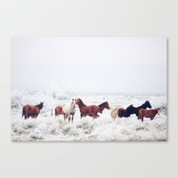 Winter Horseland Canvas Print
