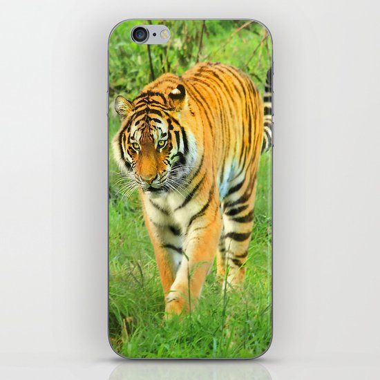 """Amul Tiger"" iPhone & iPod Skin"