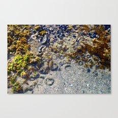 Tide Pools Canvas Print