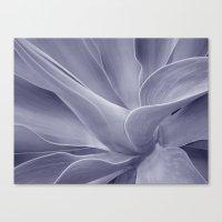 Purple Agave Attenuata Canvas Print