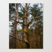 Tree Spiral Canvas Print