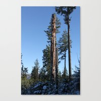 The Old Guard Canvas Print
