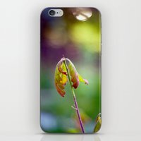 Baby Oak iPhone & iPod Skin