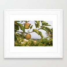 Apples on a Tree Framed Art Print