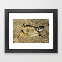 MM - Relaxing meerkat Framed Art Print