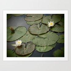 Kenilworth Lotus Art Print
