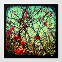 Blossom Frenzy - Through… Canvas Print
