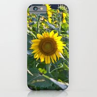 Sunflower Fields Forever - No. 5 iPhone 6 Slim Case