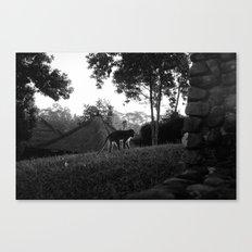 Balinese monkey ascending slope Canvas Print