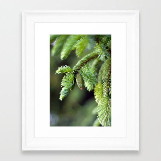 Baby Pine Cone Framed Art Print