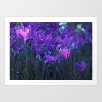 purple tulips Art Print