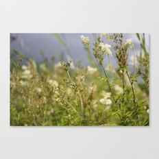 Meadow I Canvas Print