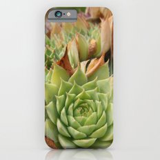 Hens and Chicks Plant iPhone 6s Slim Case