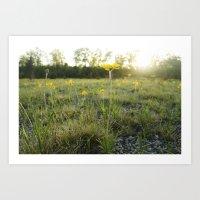 Lakeside Daisy Art Print