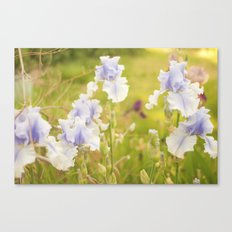 Dreamy Iris Canvas Print