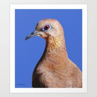 Dove closeup on blue Art Print