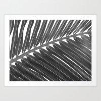 Palm 2 Art Print