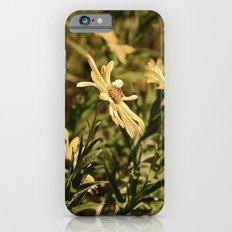 Sunward Slim Case iPhone 6s