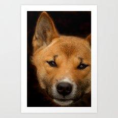 New Guinea Singing Dog Art Print