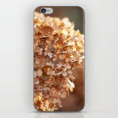 Winter Hydrangea III iPhone & iPod Skin