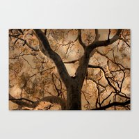 Big Tree, Late Afternoon Canvas Print